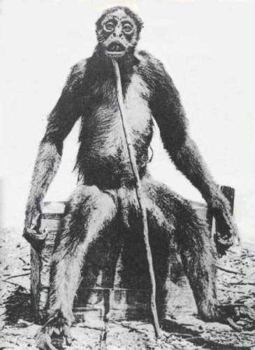 南米で発見された謎の類人猿モノスをまとめてみました。モノ・グランデ、ド・... 世界の謎と不思議